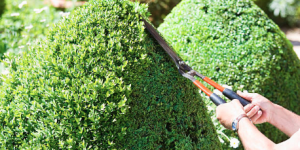 Clonakilty shrub pruning and shrub trimming garden services
